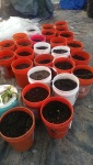 Ready for planting in January