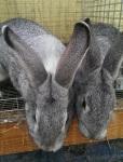 Siblings awaiting breakfast